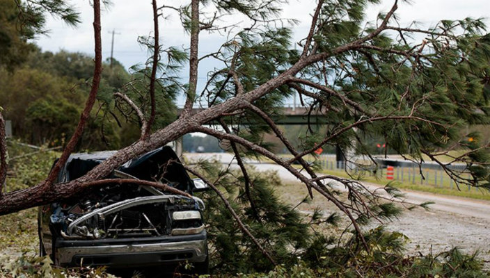 Car smashed under a downed tree in damage after a hurricane