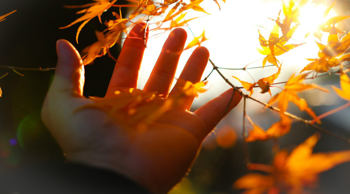 Open palm outstretched to golden fall leaves and sunshine