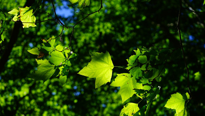 trees and leaves in sunshine